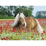 Ravensburger Puzzle, Horse in Poppy Field, 500 pieces